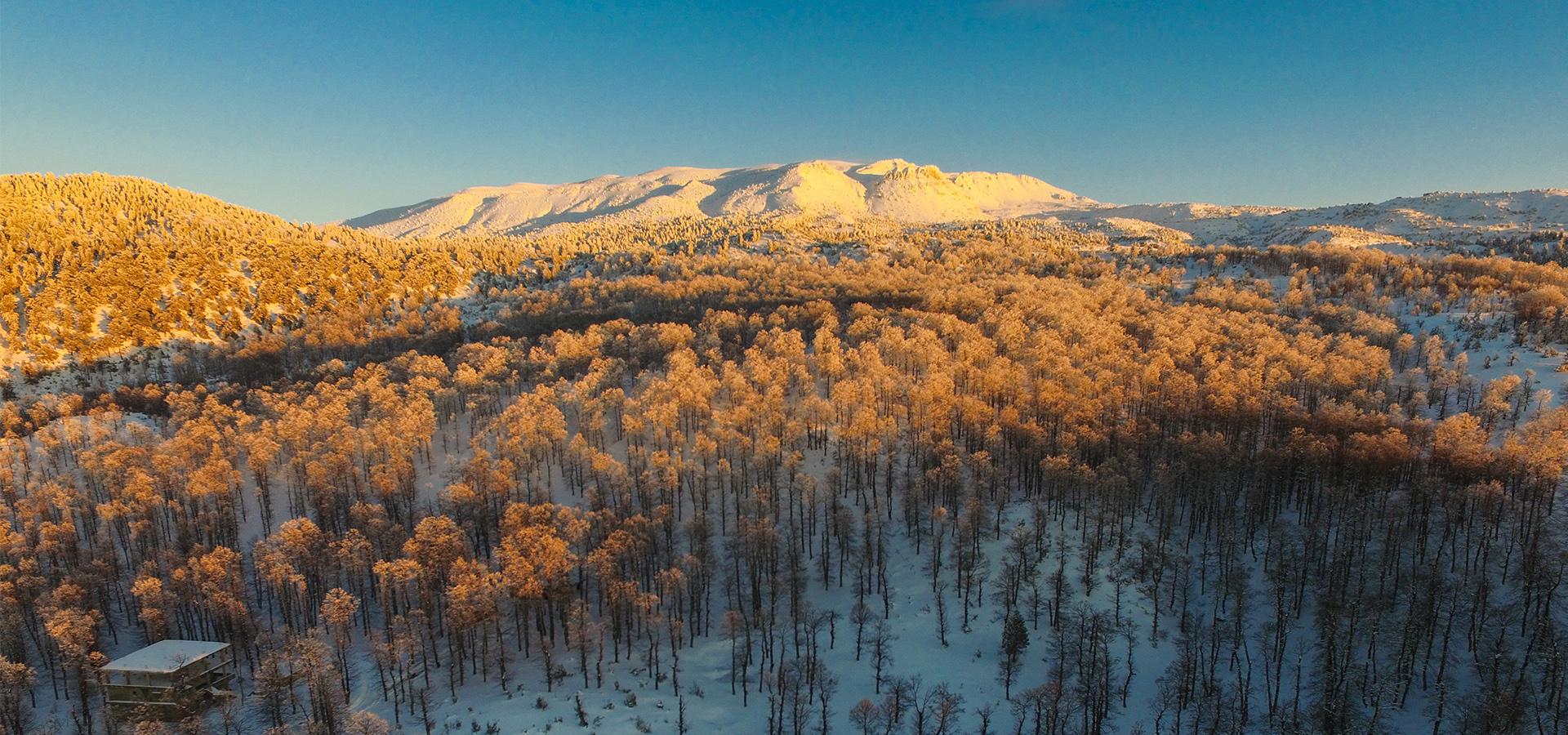 Oak Forest Fnaydek