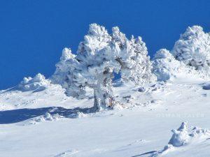 Toughest wind, coldest winters - Juniper by Osman Taleb