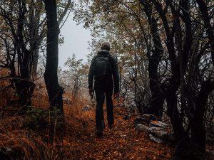 Fall scenes - Sam Kozaily