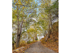falling leaves, Zaarour - Spyro Klitira